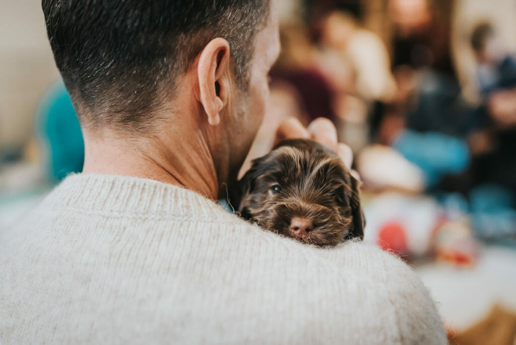 Man with his back to the camera snuggling a 4 week old labradoodle puppy on his shoulder, the puppy is staring into the camera. a warm embrace of love!