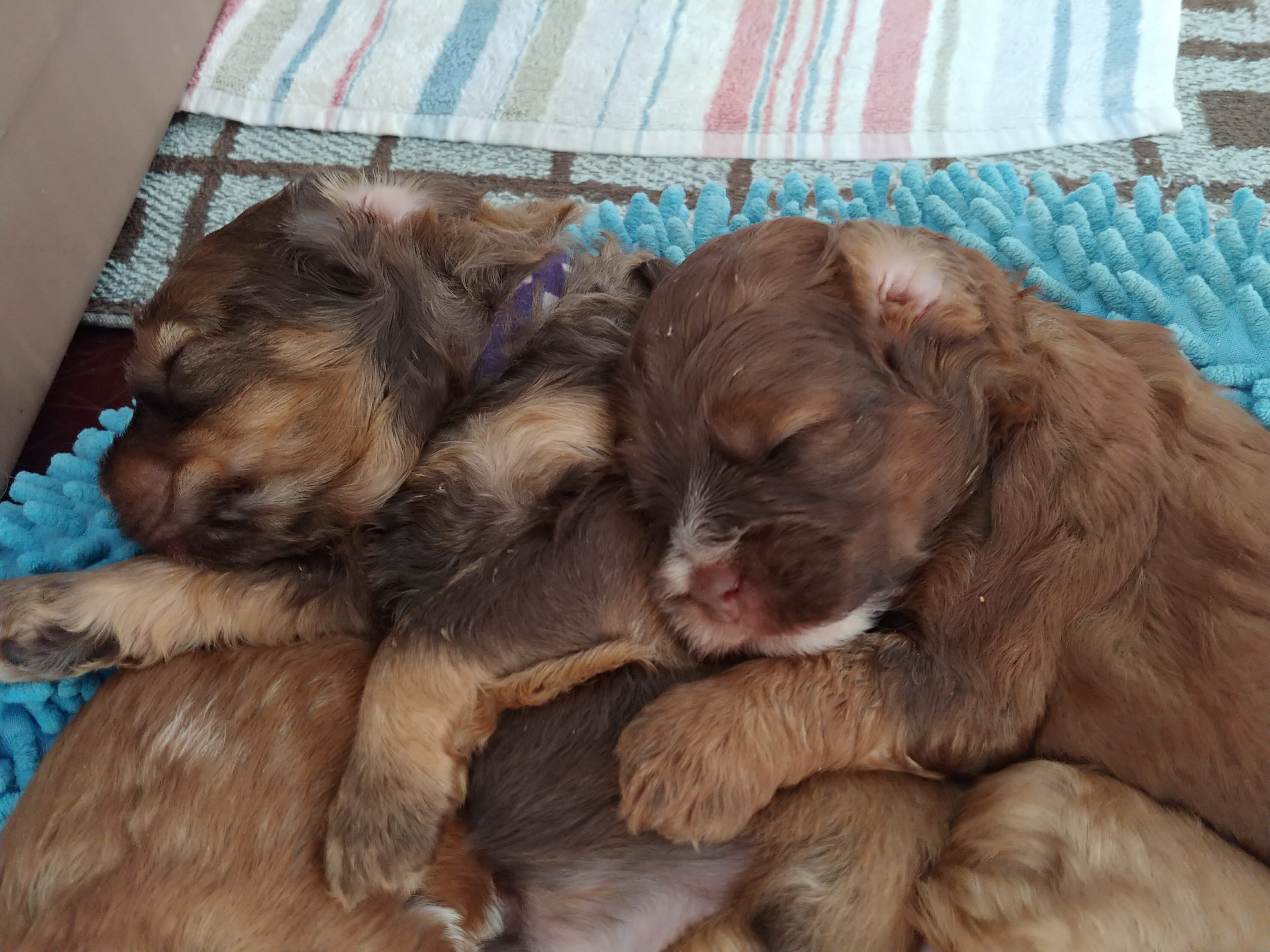 close up of four puppies sleeping on top of each other